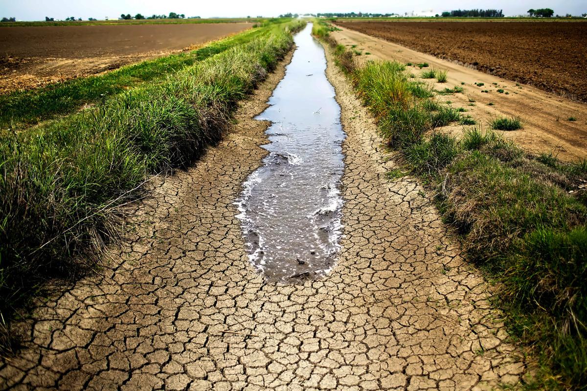 خروج جميع المساحات المزروعة بالقمح والشعير عن الخدمة في محافظة الحسكة