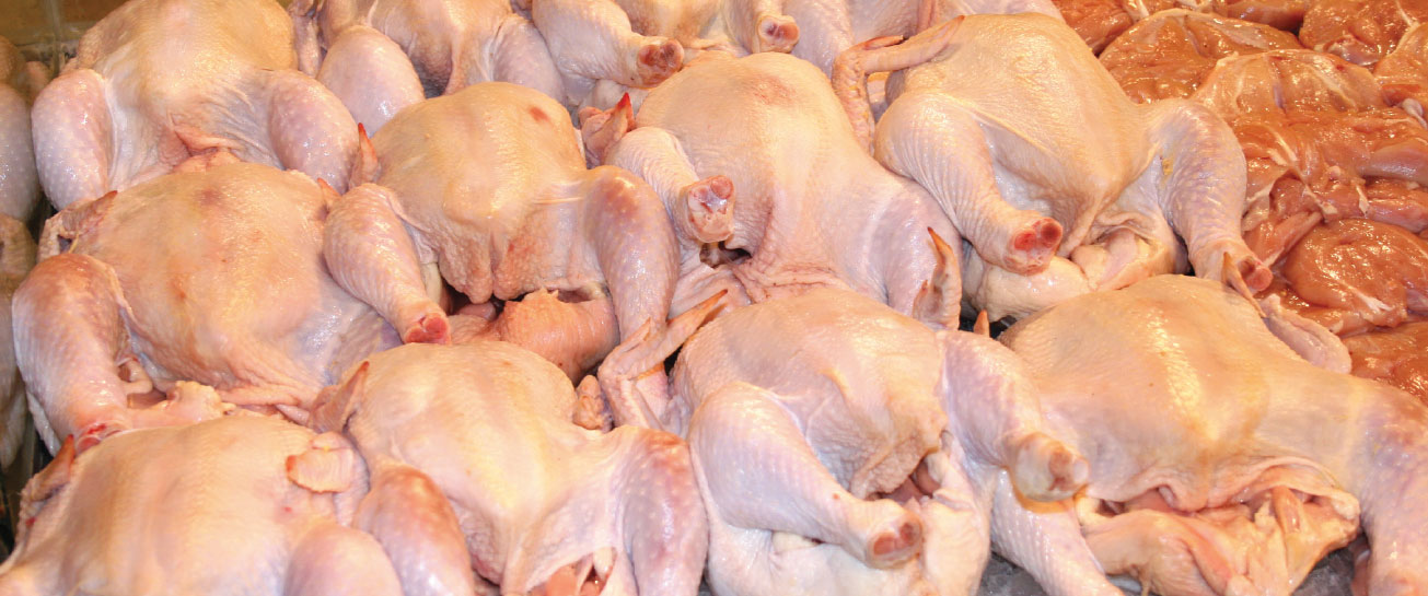 وزير الزراعة: أسعار الدواجن في سوريا سوف تتحسن بعد 45 يوم