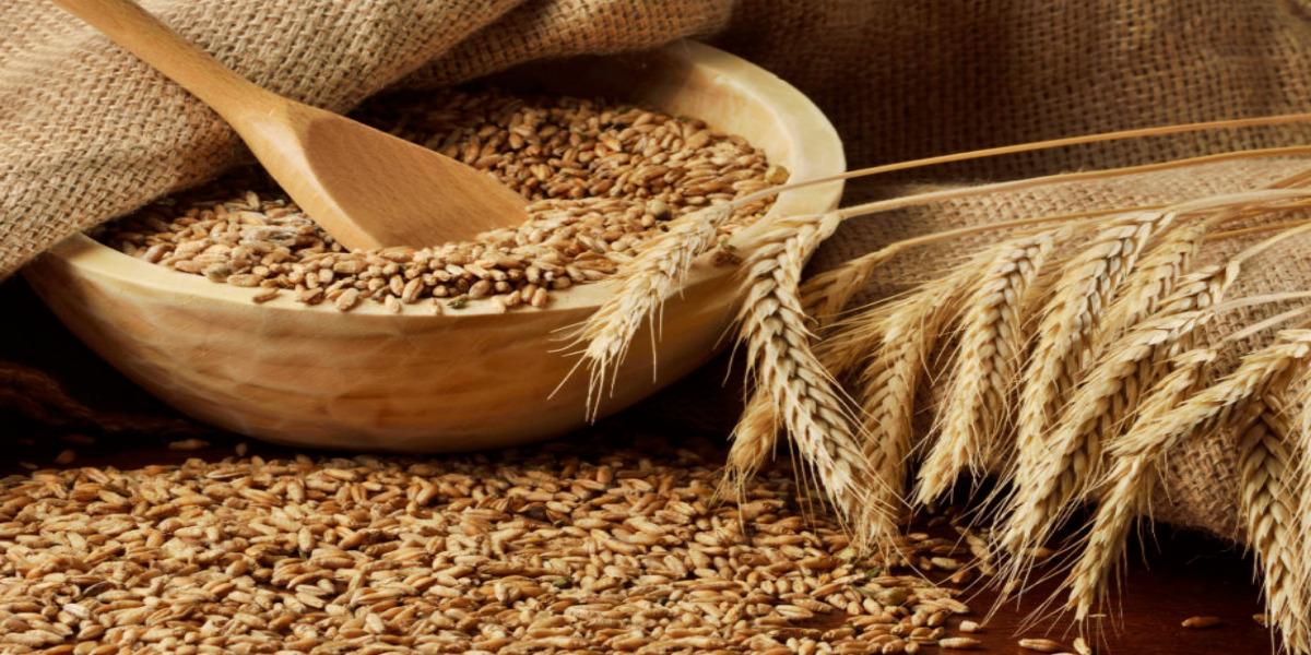 مسؤول سوري يعترف بأن الحكومة أخذت القمح بسعر لم يوافق عليه الفلاحون